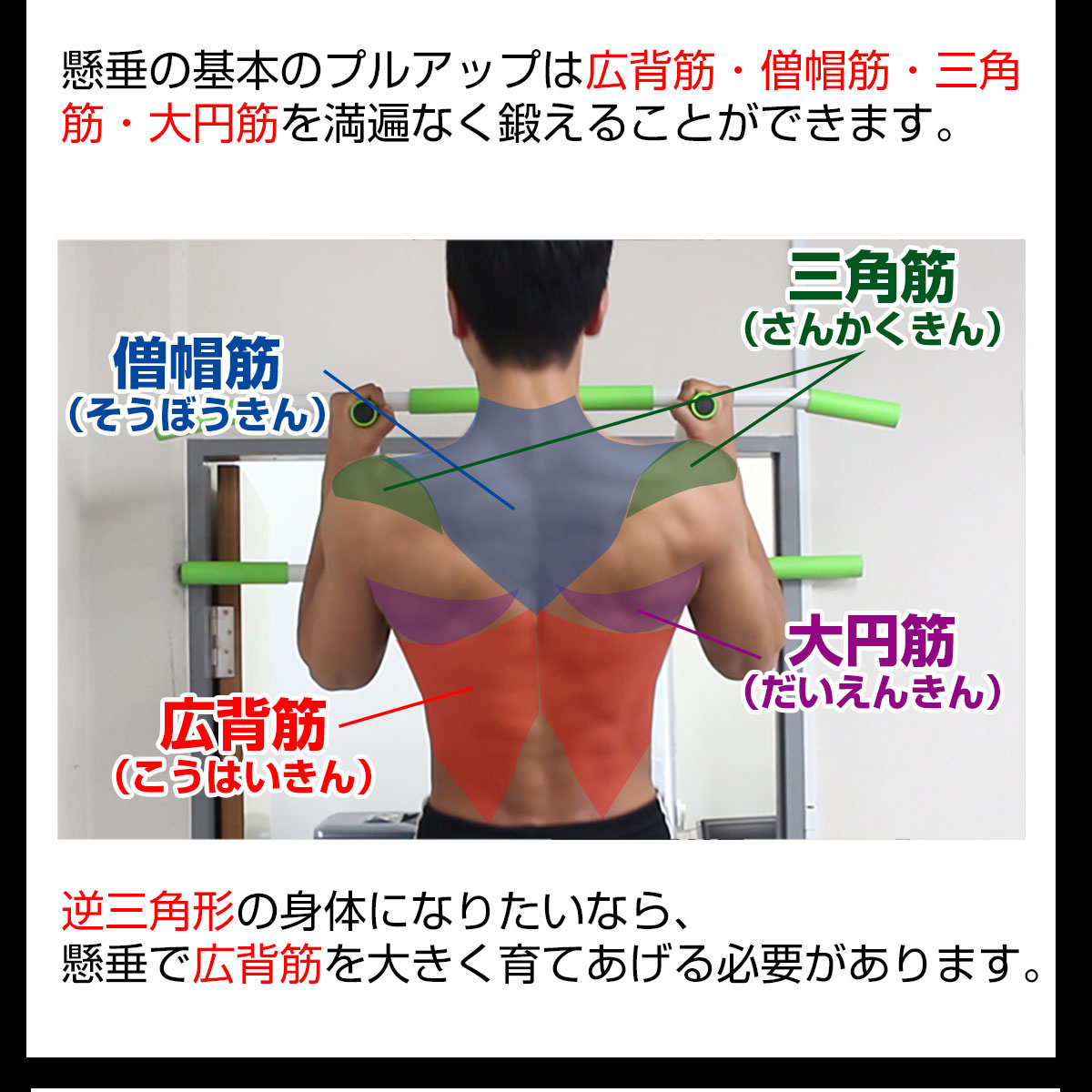 懸垂 使う 筋肉