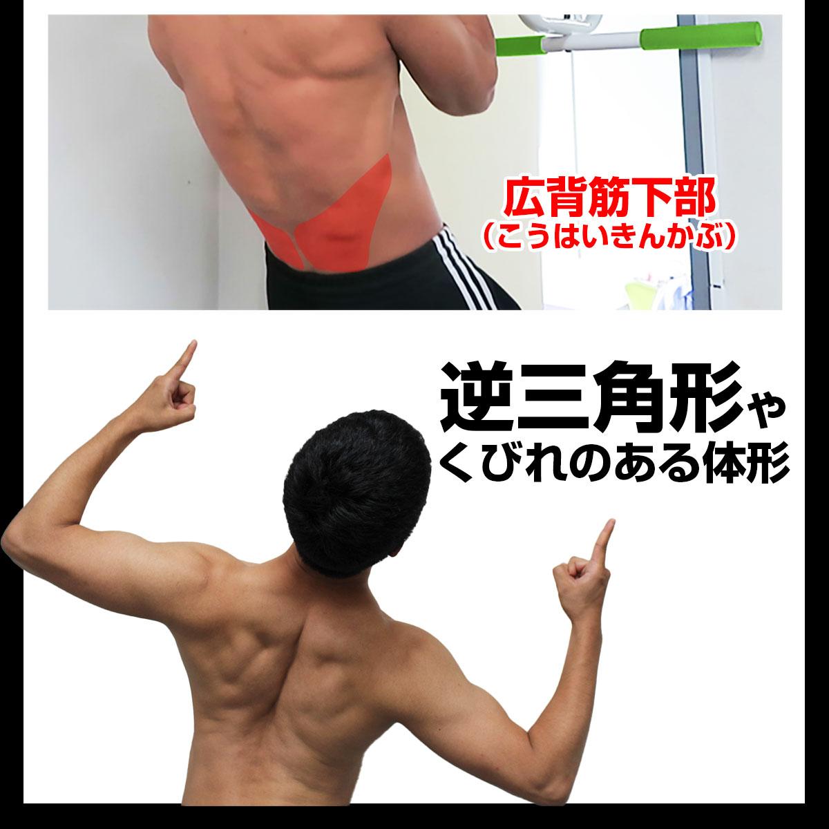 ナローグリッププルアップで鍛えられる筋肉