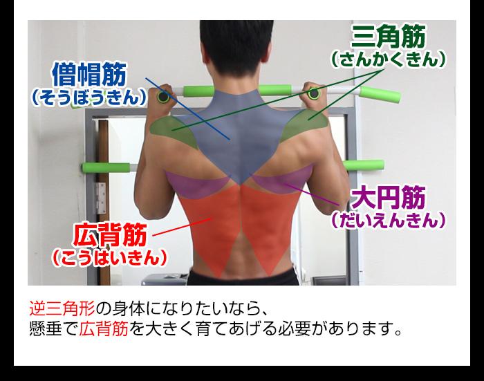 プルアップで鍛えられる筋肉